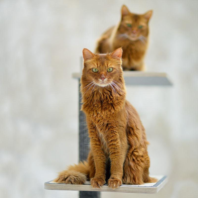 Hello stylecats