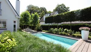 Bomen zorgen voor privacy: moderne Tuin door Stoop Tuinen