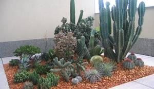 Jardins Naturais: Terraços  por Junia Lobo Paisagismo