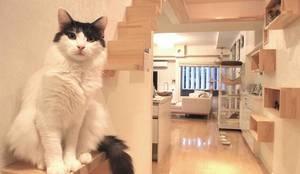 猫階段と猫ステップボックス: 一級建築士事務所 かねまき・こくぼ空間工房が手掛けた廊下 & 玄関です。