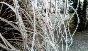 Den Garten auf den Winter vorbereiten:  Vorgarten von Garten AG