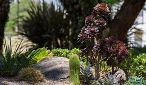 Jardines de estilo rural por Mexikan Curious