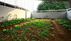 Thiết Kế Nhà Ống 3 Tầng Có Vườn Rau Trên Sân Thượng:  Nhà vườn by Công ty TNHH Xây Dựng TM – DV Song Phát