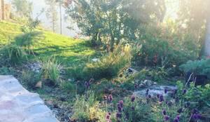 Jardín silvestre y de bajo mantenimiento: Jardines de estilo rústico por Agroinnovacion paisajismo sustentable