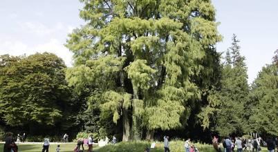 GREENCURE—landscape & healing gardens