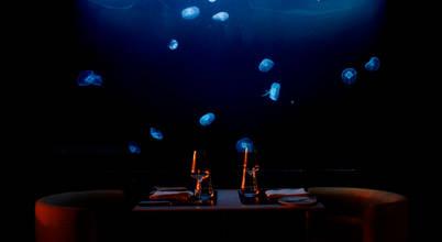 ADn Aquarium Design