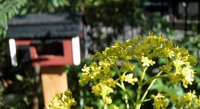 jardinier Kirikui