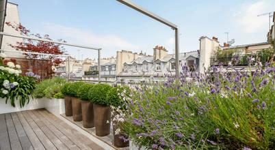 Terrasses des Oliviers—Paysagiste Paris