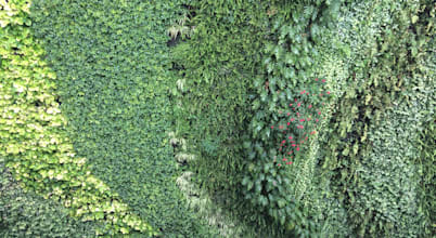 Verde360°
