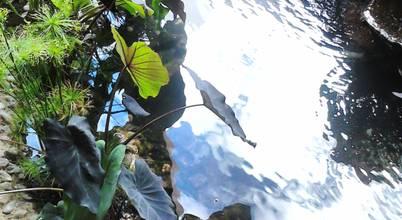 Ambient Natura