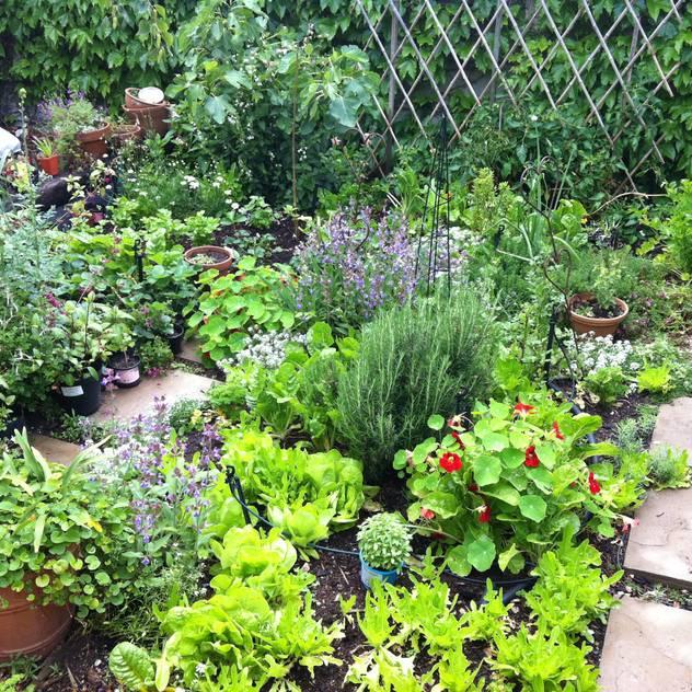 Herb garden homify Country style garden