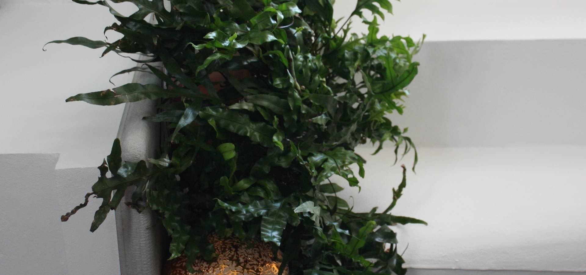 Tiziano Codiferro— Master Gardener