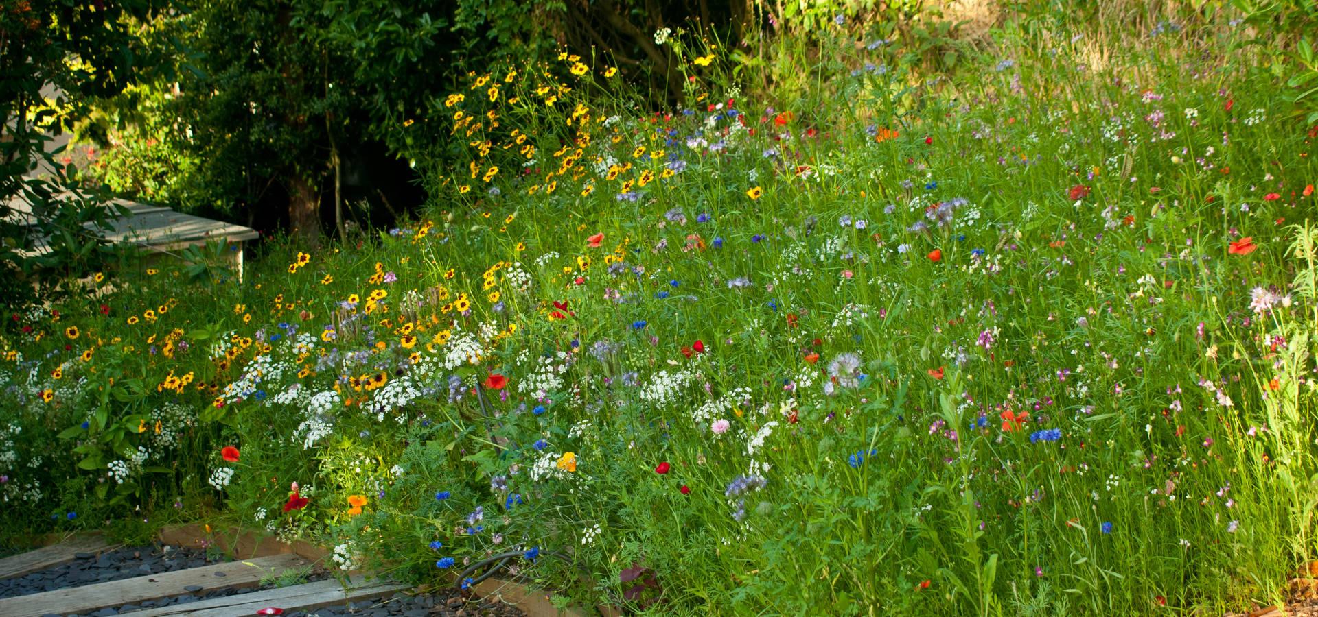Katherine Roper Landscape & Garden Design