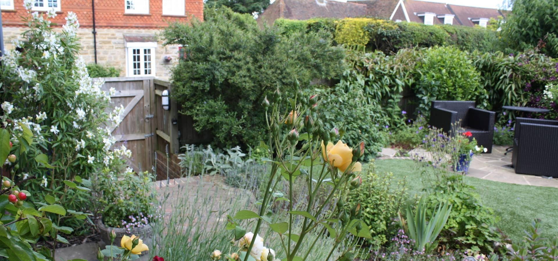 Garden Studio Allium