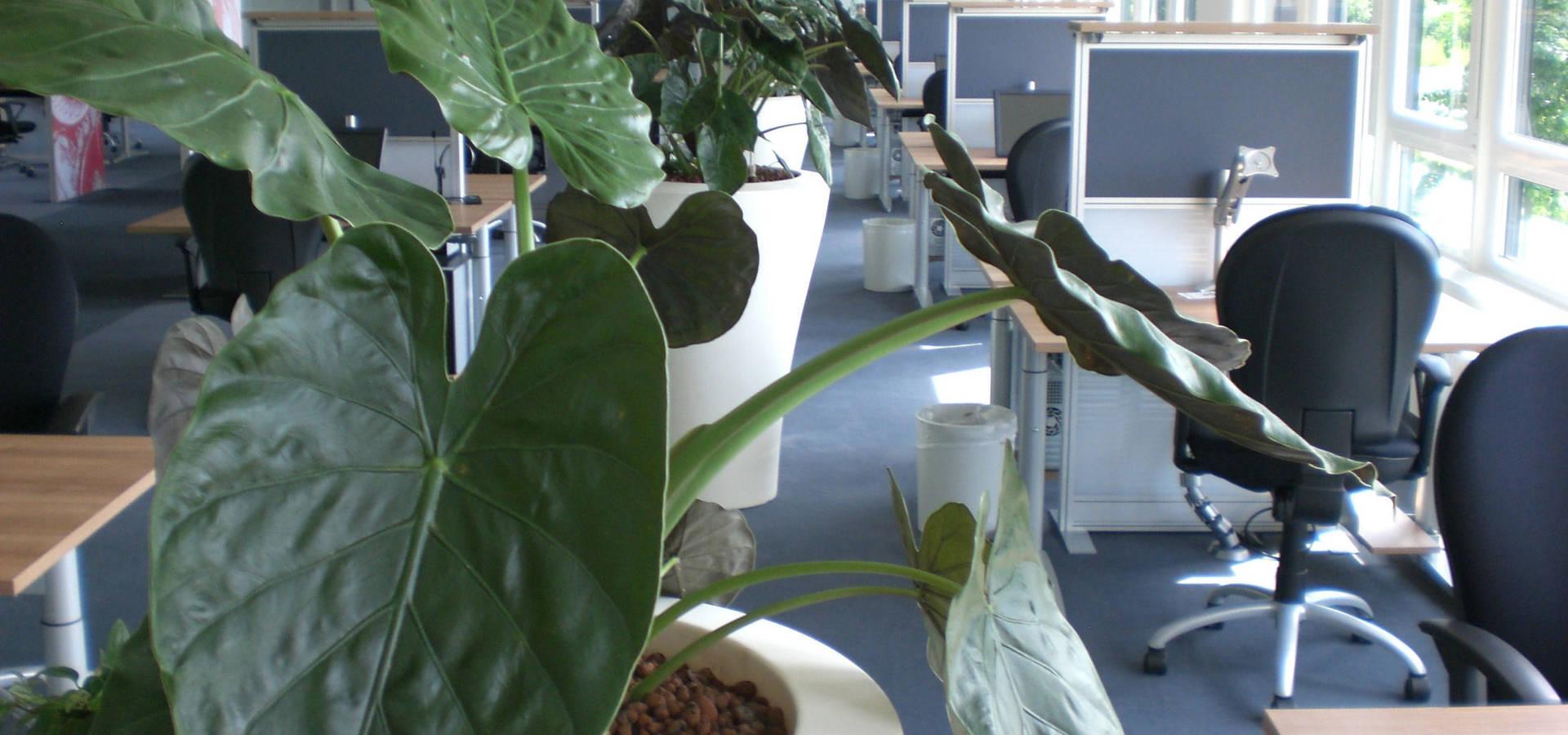 BAUMHAUS GmbH Raumbegrünung Pflanzenpflege