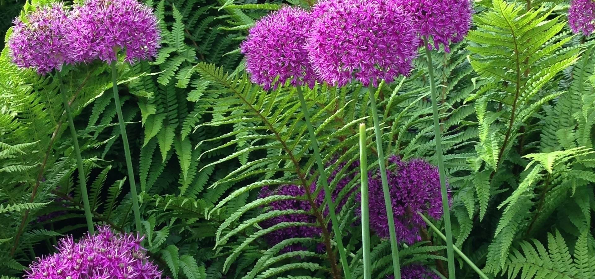 Anne Macfie Garden Design