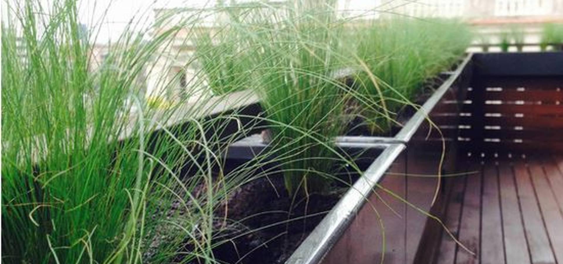Singular Jardinería y Paisajismo