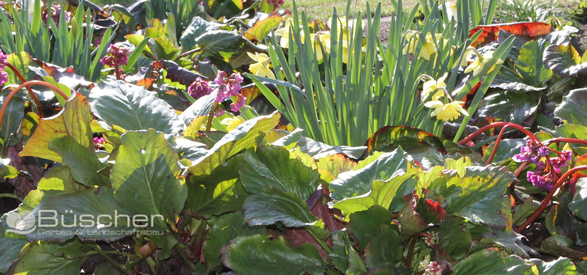 Büscher Garten- und Landschaftsbau