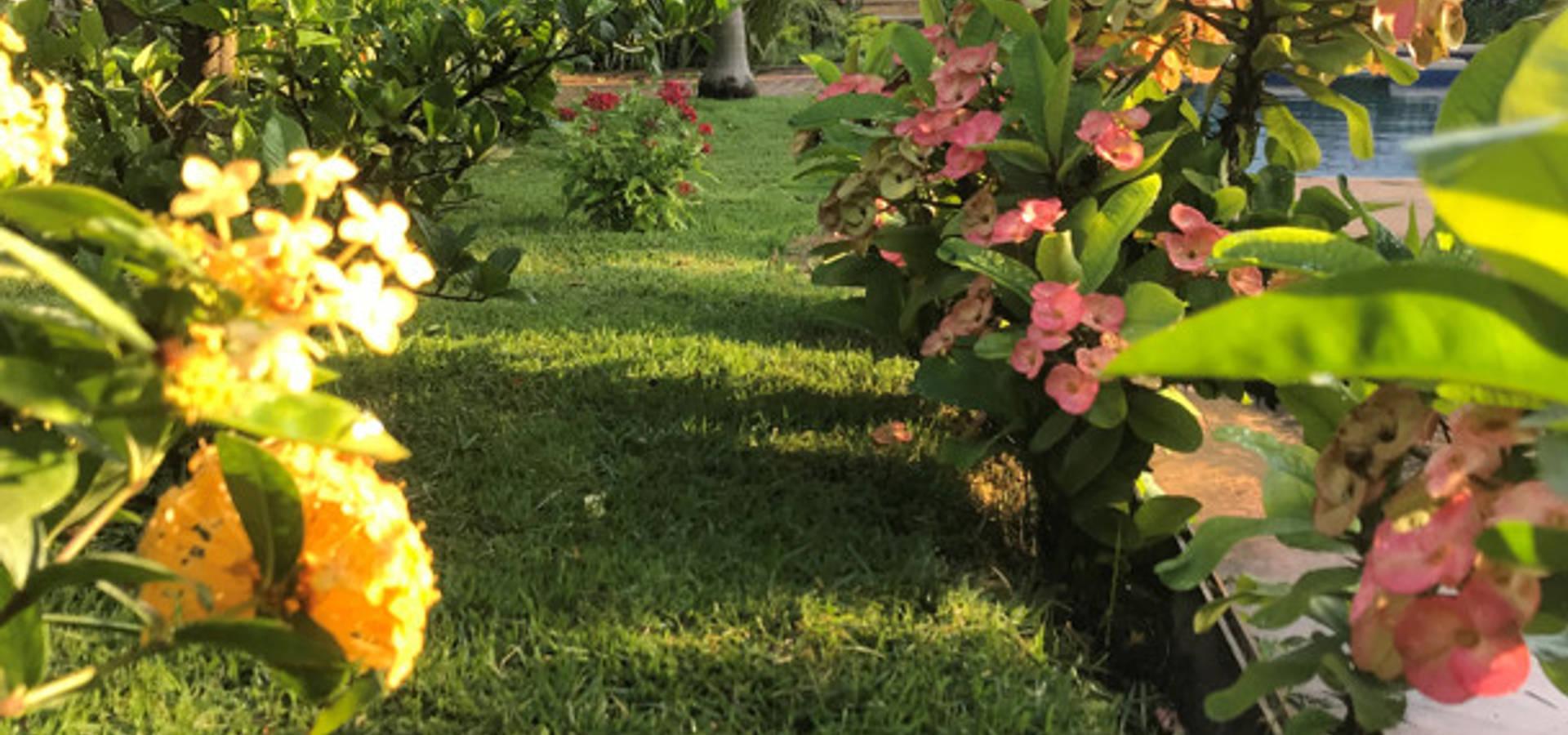 Productores de plantas Concepto Verde