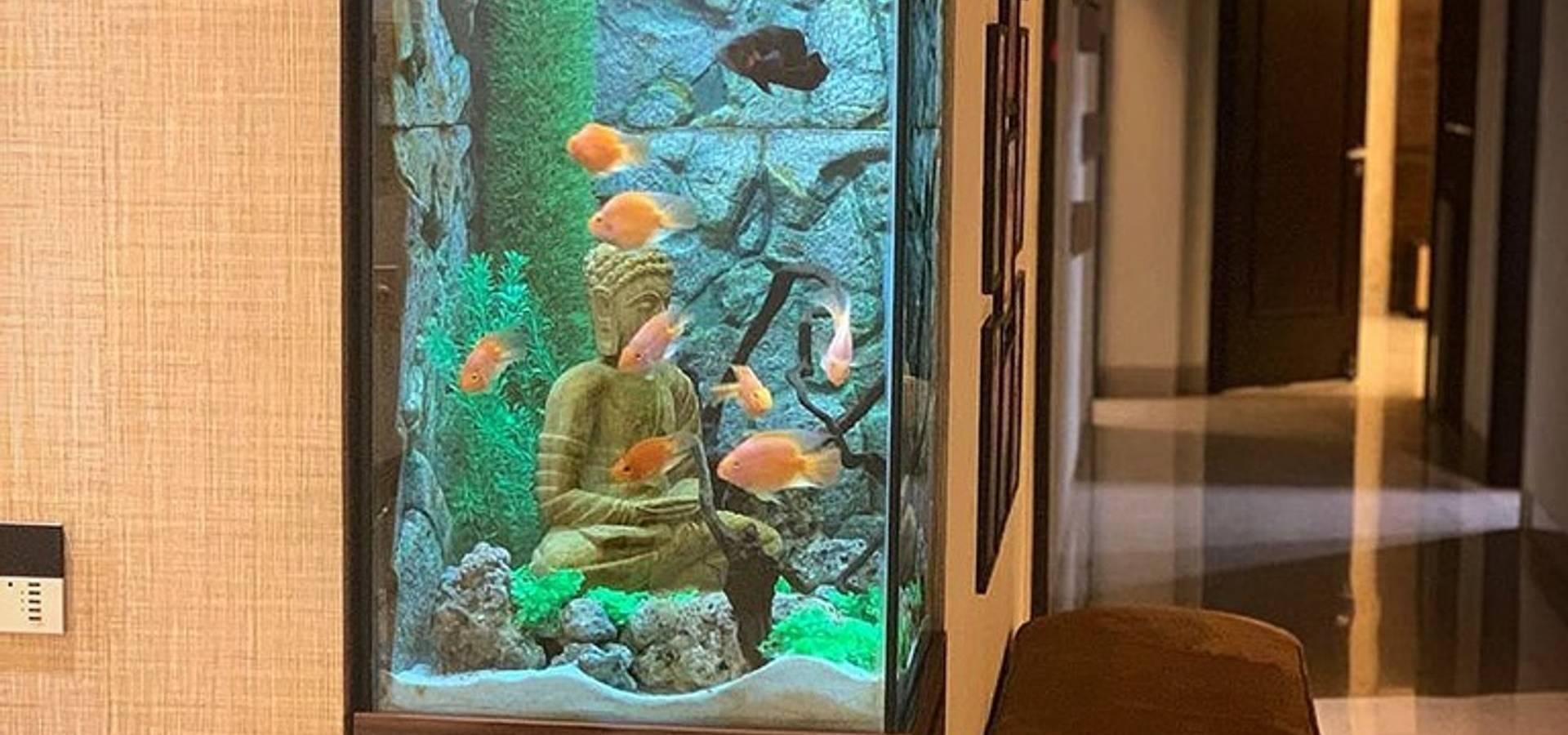 Aquarist