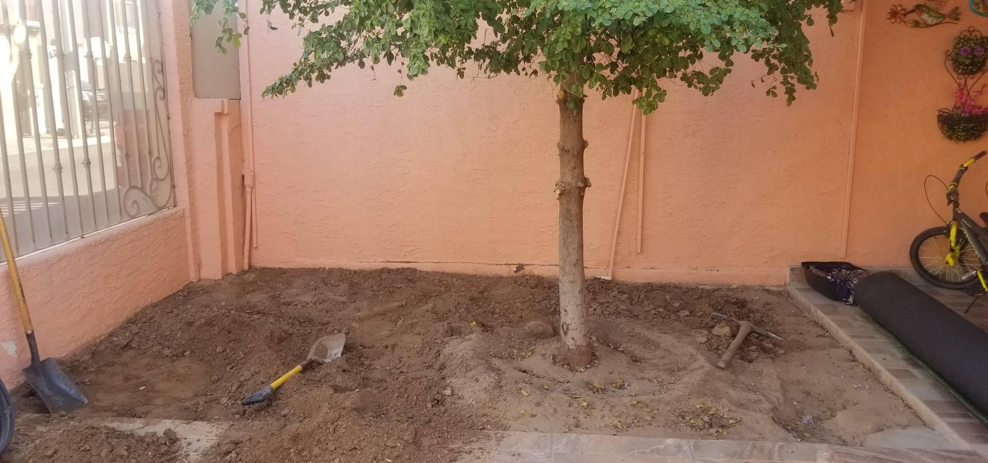 🌳Servicios de jardinería Torres 🌳