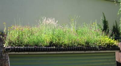 Organic Roofs