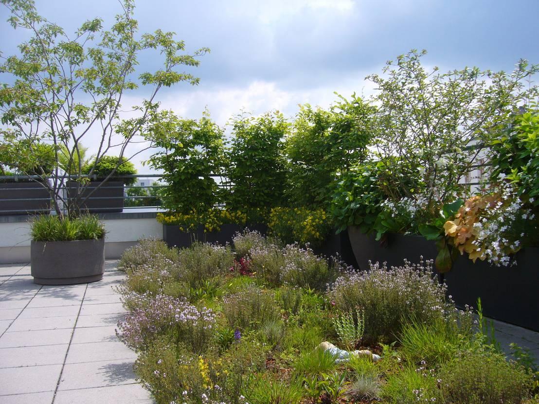 Dachterrassengestaltung  Blumen & Gärten: Dachterrassengestaltung München-Schwabing | homify