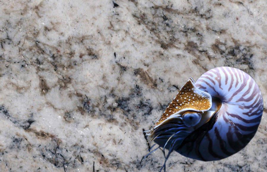 Wieland Naturstein granit white fusion by wieland naturstein gmbh homify