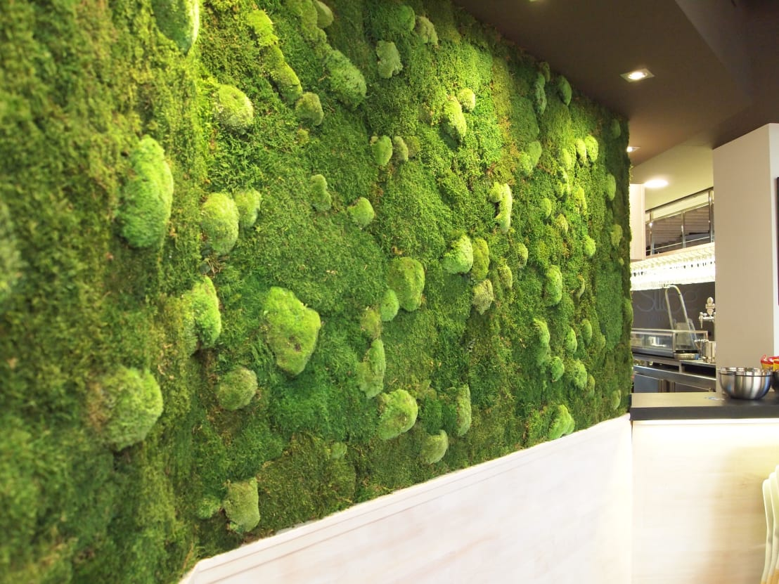 Jardin vertical planta preservada de arquigreen homify for Jardin artificial interior
