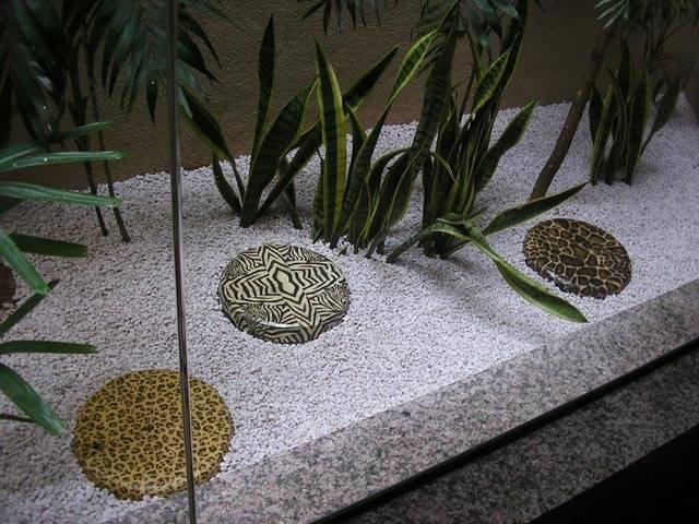 C mo hacer un jard n zen desgarradoramente bello - Hacer un jardin zen ...