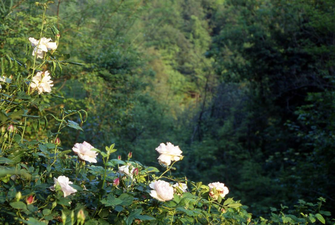Il giardino naturale de massimo semola progettazione for Progettazione giardini milano