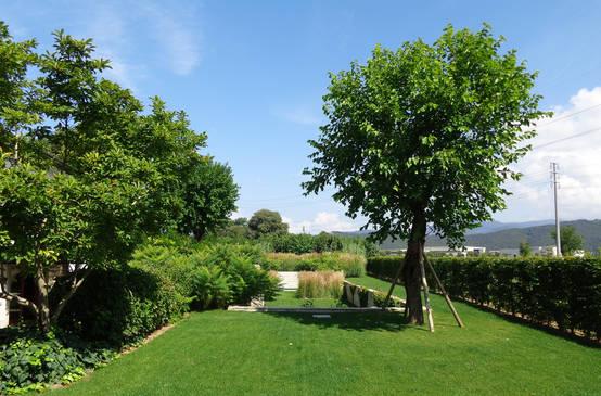 25 alberi da giardino da scegliere per piccoli spazi for Alberi da giardino piccoli