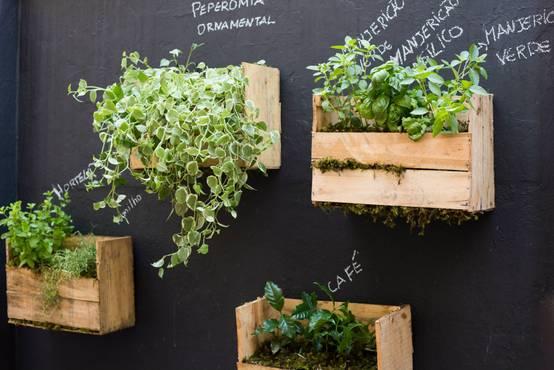 comment faire pousser ses propres plantes aromatiques. Black Bedroom Furniture Sets. Home Design Ideas