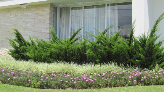 10 plantas de exterior para jardines modernos for Flores de jardin exterior