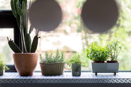 讓自然走進你家吧!12種輕鬆上手的居家植物裝飾法