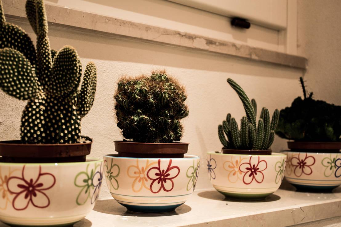 10 modi per decorare casa con le piante grasse - Piante in camera ...