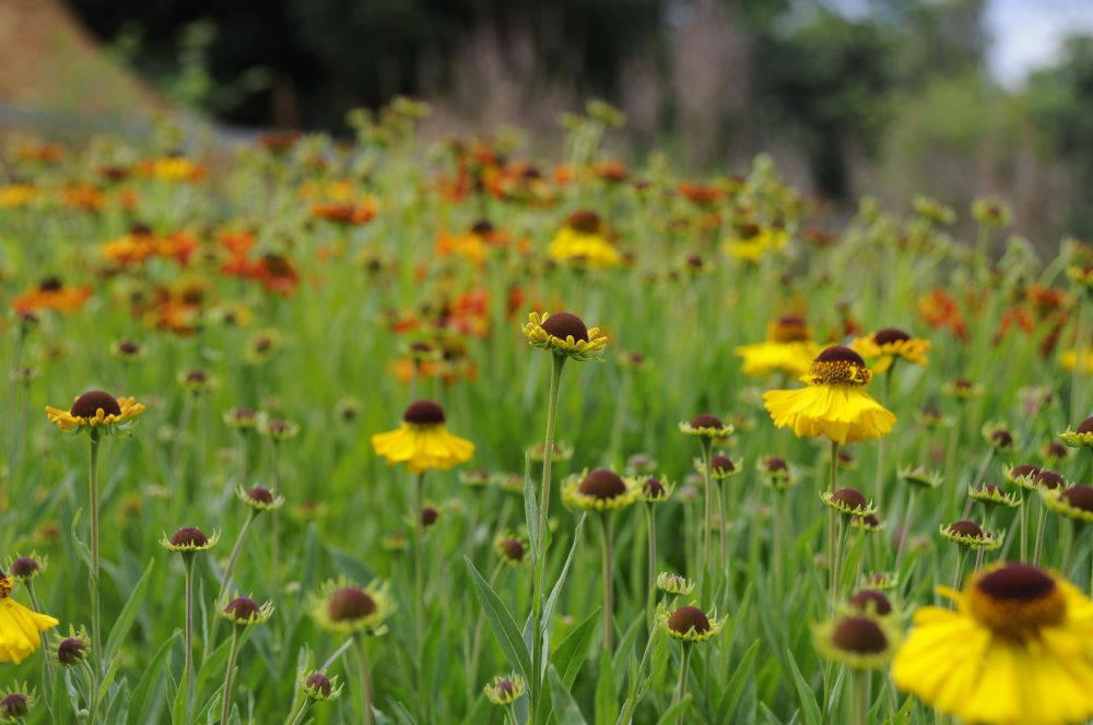 Gartentipps im september for Garten tipps