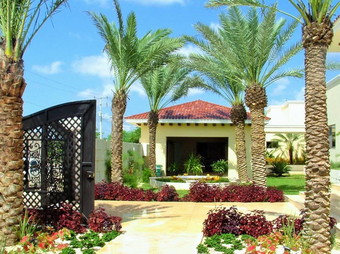 10 plantas para jardines modernos y sensacionales - Fotos de jardines modernos ...